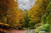 Autumn in Pelion, Greece