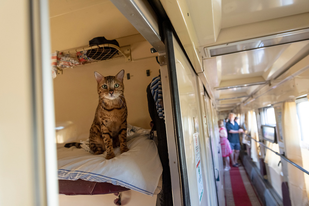 Mariupol, Ukraine - September 24, 2015: A cat is perched on an upper bunk in a sleeper car on a train traveling from Kiev to Mariupol, Ukraine. It belongs to one of the passengers.