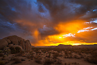 I was in Joshua Tree National Park when monsoon thunderstorms passed by throughout the night keeping me awake. Just before sunrise it started raining. With thick clouds above I was not expecting a very colorful sunrise. But then this happened. The rising sun highlighted the wisps of rain as they fell into the dry air. The clouds cast an orange glow across the desert floor as flashes of lightning streaked across the sky. And a minute later a spectacular rainbow appeared behind me. This entire light show only lasted a few minutes so I had to rush to capture it all. It was the most awe-inspiring sunrise I've ever seen and my pictures could hardly do it justice.<br /> <br /> Date Taken: August 20, 2014