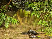 Mystery at Barnes Creek, Olympic National Park, Washington