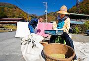 An elderly resident sorts soya beans Shouji Village near Mt. Fuji, YAMANASHI PREF., Japan on 03 Nov. 2009. ROBERT GILHOOLY PHOTO