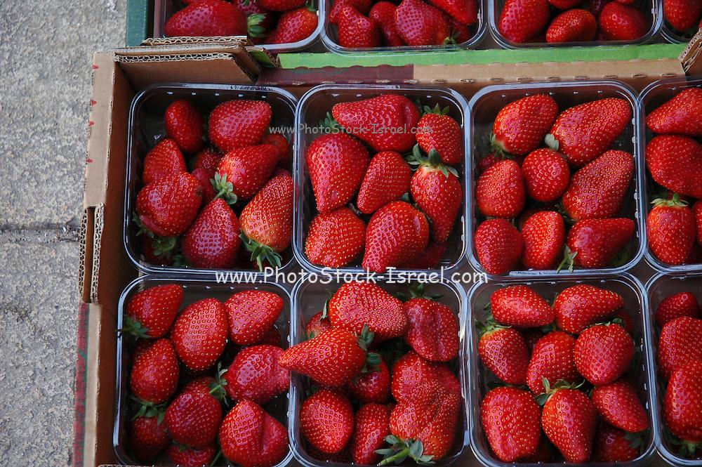 strawberries at an outdoor market, Akko, Israel