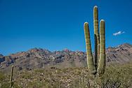 Tucson, Arizona.