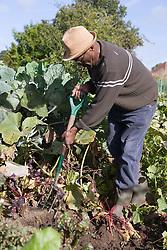 Older man digging his allotment,