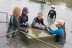 Earthwatch Team Working Up Leopard Shark