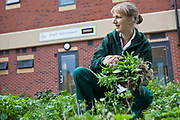 A staff member of the University Hospital of South Manchester (UHSM) working in the allotment. The hospital provides services to their staff which other hospitals do not, including nursery care and allotment space. This cultivates a friendly relationship between the staff and the hospital, leading to a happier and stronger workforce. Manchester, United Kingdom.