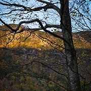 Autumn Tree, Vertical