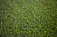 Aerial view of forest in Kauai, Hawaii, USA