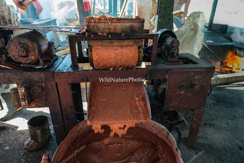 The press making guava pulp during the process of making Guyaba bars (Florida, Camagüay Province, Cuba).