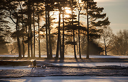 © Licensed to London News Pictures. 18/01/2017. Walton on the Hill, UK. A woman walks her dog as the sun rises on a frosty Walton Heath south of London. Britain is continuing to experience a cold spell. Photo credit: Peter Macdiarmid/LNP