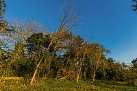 rain forest trees of the Mombacho Volcano Granada in Nicaragua