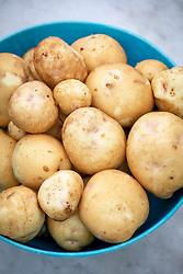Potato 'Yukon Gold' - Solanum tuberosum 'Yukon Gold'