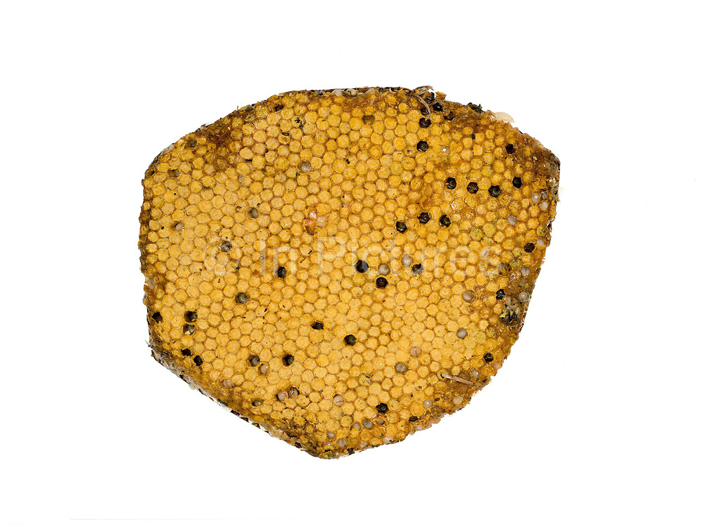 Honeycomb with bee larvae for sale at Don Mak Kai market on the outskirts of Vientiane city, Lao PDR. The Lao are very reliant on products collected or caught from the wild. Insects such as ants, crickets, wasps and their nests are especially easy to find in nearby forests and fields. A walk through any market will illustrate the agro and bio-diversity of Laos.