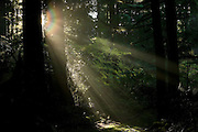 Solar rays cut through the last traces of fog in the Federation Forest east of Enumclaw, Washington.