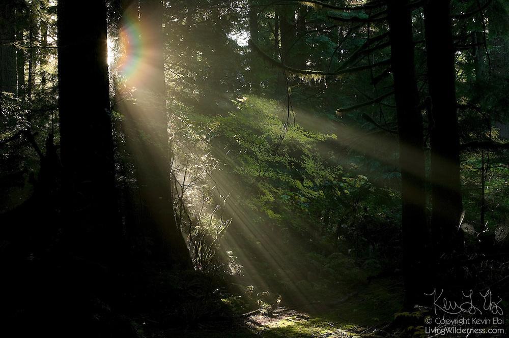 Solar rays cut through the last traces of fog in the Federation Forest east of Enumclaw, Washington.
