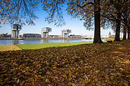 Europa, Deutschland, Nordrhein-Westfalen, Koeln, Baeume an der Rheinpromenade der Alfred-Schuette-Allee in Koeln-Deutz, Blick zu den Kranhaeusern im Rheinauhafen, rechts der Dom. - <br /> <br /> Europe, Germany, North Rhine-Westphalia, Cologne, trees at the street Alfred-Schuette-Allee on the river Rhine in the district Deutz, view to the Crane Houses at the Rheinau harbor, on the right sight the cathedral.