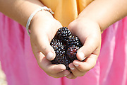 Charlotte, 6, holds black berries from the garden at Hares Farm. CREDIT: Vanessa Berberian for The Wall Street Journal<br /> UKFARM-Hares Farm