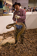 SWEETWATER, TX - MARCH 14: A Jaycees volunteer snake handler shows off a western diamondback rattlersnakes brought in by hunters during the 51st Annual Sweetwater Texas Rattlesnake Round-Up, March 14, 2009 in Sweetwater, Texas. Approximately 24,000 pounds of rattlesnakes will be collected, milked for venom and the meat served to support charity. (Photo by Richard Ellis)
