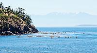 Guided kayak tours on Haro Straight in July near County Park, San Juan Island, Washington, USA.