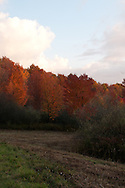 This photo is of a sunset at one of my favorite local nature locations, Tanglewood Nature Center in Elmira, NY.