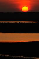 Sunrise over the delta, Danube delta rewilding area, Romania