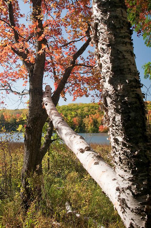 Fall color at Harlow Lake near Marquette Michigan.