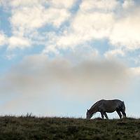 WIld Horses - United Kingdom