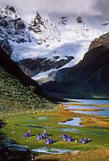 Trekkers tents at Lake Jahuacocha (4066 m or 13,340 feet), Cordillera Huayhuash, Andes Mountains, Peru, South America.