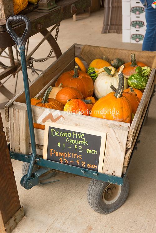 Pumpkins in a wagon at Kelly's Orchard, Buhl, Idaho.