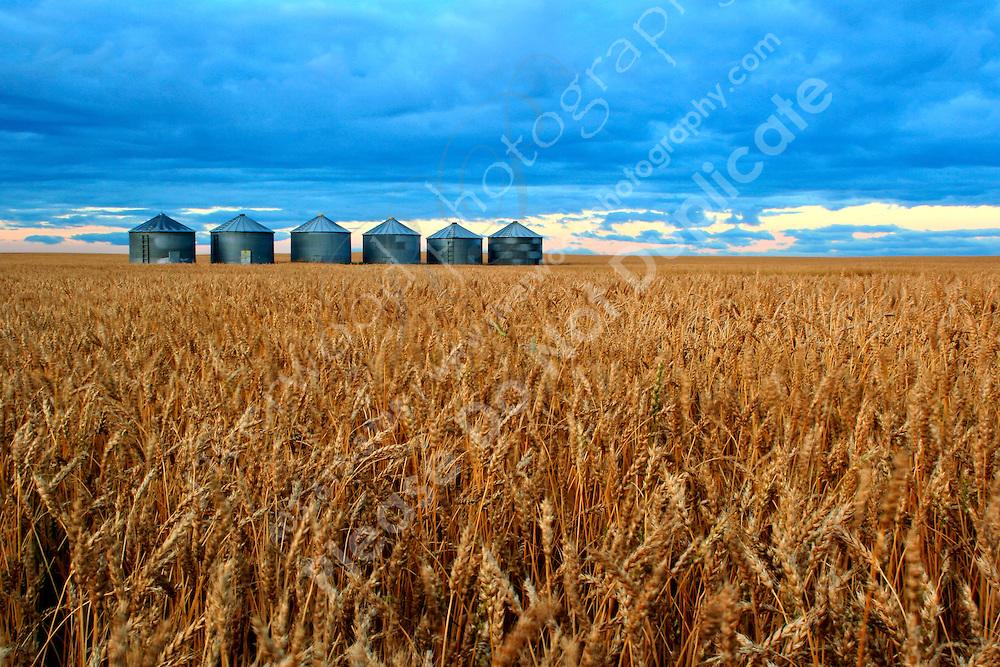 Grain Bins East of Calgary