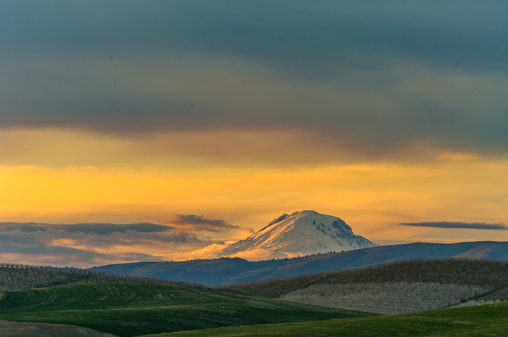 Agricultural field with Mount Adams in the distance, evening light, April, Columbia River Basin, Washington, USA