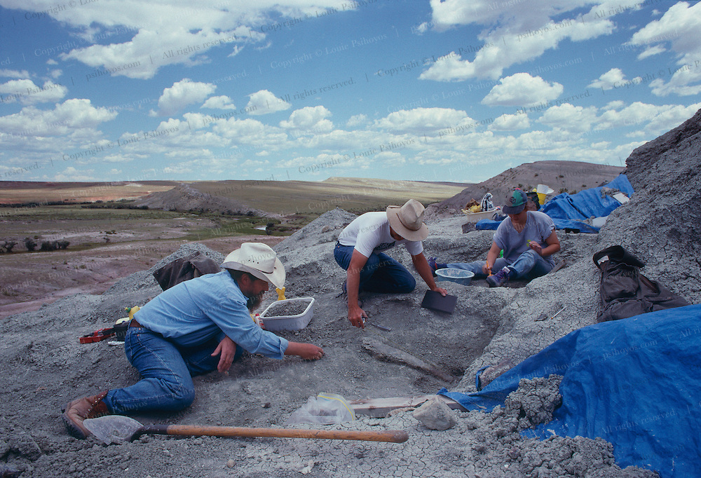 Paleontologist Bob Bakker and his crew excavate for dinosaurs at Como Bluff, Wyoming once a Jurassic Parkway.
