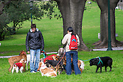 Two persons walking many dogs, in a park, in Buenos Aires there are many dog kindergarten where you can leave the dog for the day and someone takes care of it and walks it when you are working. Buenos Aires Argentina, South America