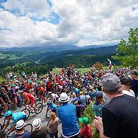 16.06.2019; Langnau im Emmental; Radsport - Tour de Suisse 2019; 2.Etappe: Langnau i.E. - Langnau i.E.; Das Feld mit Steve Morabito (SUI) im Aufstieg zum Chuderhuesi (Andy Mueller/freshfocus)