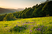 Backlit bluebells in a clearing in Hay Wood (below Froggatt Edge). The Derwent Valley, Bamford Edge and Win Hill all visible in the distance. Derbyshire, Peak District National Park, England, UK. Spring.