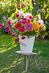 Cut flowers being conditioned in a bucket. Zinnias and cosmos