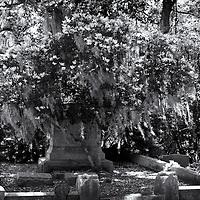 Savannah, GA  Bonaventure Cemetery 40th Anniversary Tour 29 201204