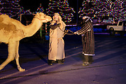 22 DECEMBER 2020 - WEST DES MOINES, IOWA: Two of the Wise Men wrangle a camel during the drive through Christmas experience at Lutheran Church of Hope. About 3,000 cars per night going through the drive through Christmas pageant at Lutheran Church of Hope in West Des Moines. The church staged the drive through Christmas pageant because they decided it wasn't safe to hold in person Christmas services or pageant during the COVID-19 pandemic. On Tuesday night people started lining up to get into the pageant almost an hour before it started.     PHOTO BY JACK KURTZ