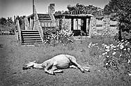 Sleeping horse in Bargebi village. Gali. 2004.