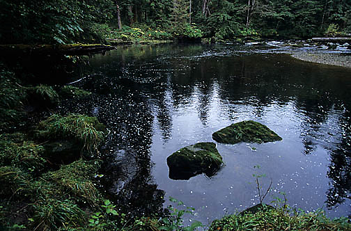 British Columbia, River on Princess Royal Island. Canada.