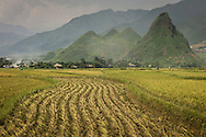 Rice fields between Nghia Lo and Mu Cang Chai in mid-harvest, Yen Bai Province, Northern Vietnam, Southeast Asia.