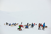 Commercial sled dog teams and their human clients in Bolterdalen, Svalbard.