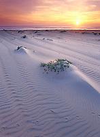 Sunset at Guadalupe - Nipomo Dunes, Guadalupe California