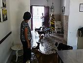 Saving the dogs of Havana