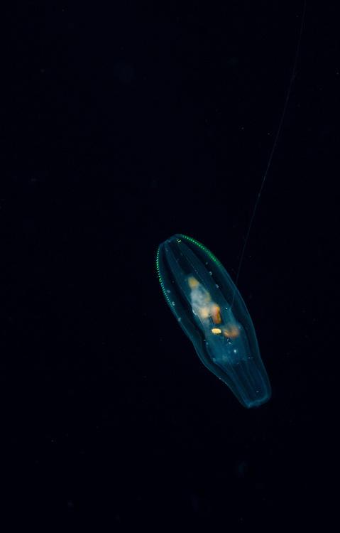 Jellyfish, Unknown