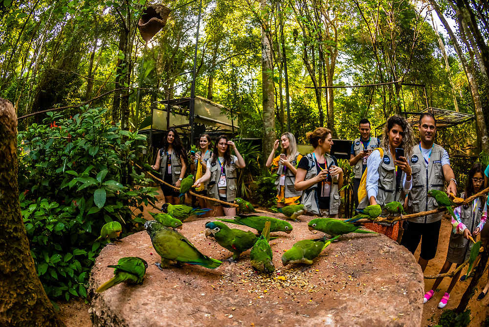 Tourists on the early morning Backstage Experience feed parakeets, Parque des Aves (Bird Park), Foz do Iguacu, Brazil.    <br /> <br /> Parque das Aves is the only institution in the world focused on the conservation of the beautiful and exuberant birds of the Atlantic Rainforest, offering an up-close, immersive and charming experience with them.