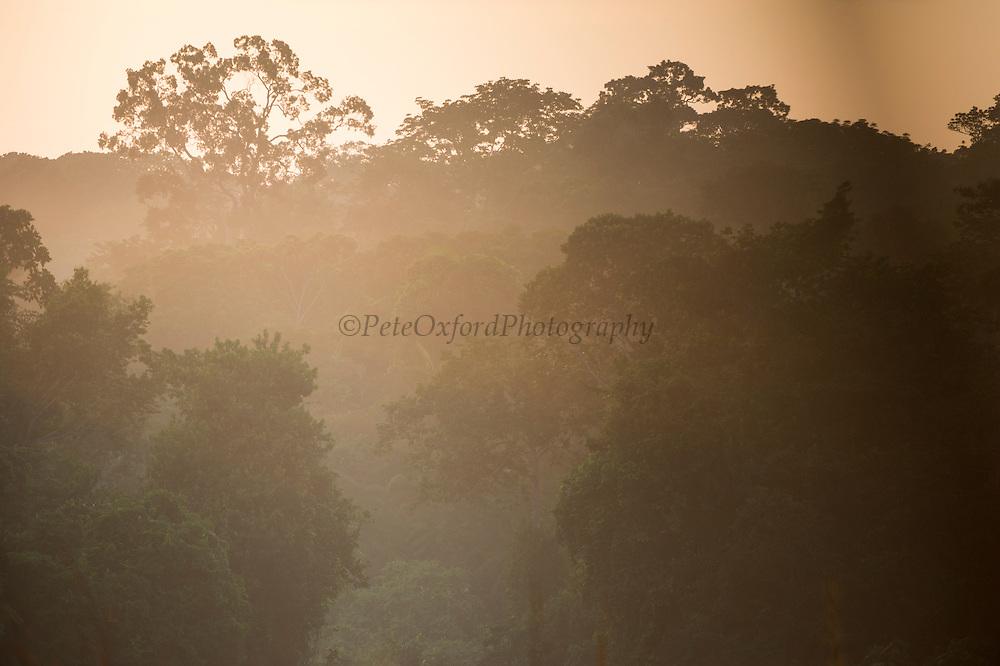 Morning mist<br /> Rain forest understory<br /> Odzala - Kokoua National Park<br /> Republic of Congo (Congo - Brazzaville)<br /> AFRICA
