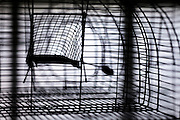 wire metal rodent life-trap close up