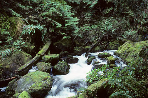 Olympic National Park, Mountain river cascades down and meanders through rain forest.  Washington.