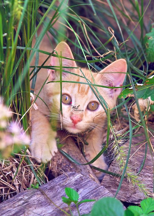 Golden Eyed Kitten